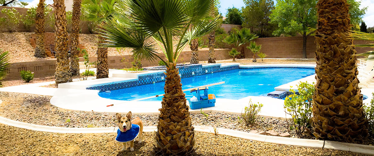 Professional Swimming Pool Services In Henderson And Las